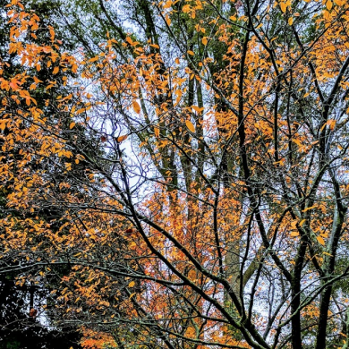 trees with orange leaves in autumn