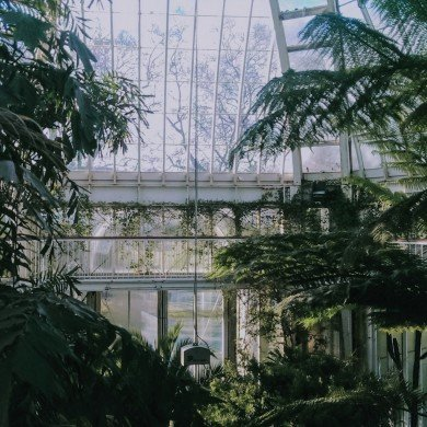 inside lush greenhouse with large windows and towering green plants
