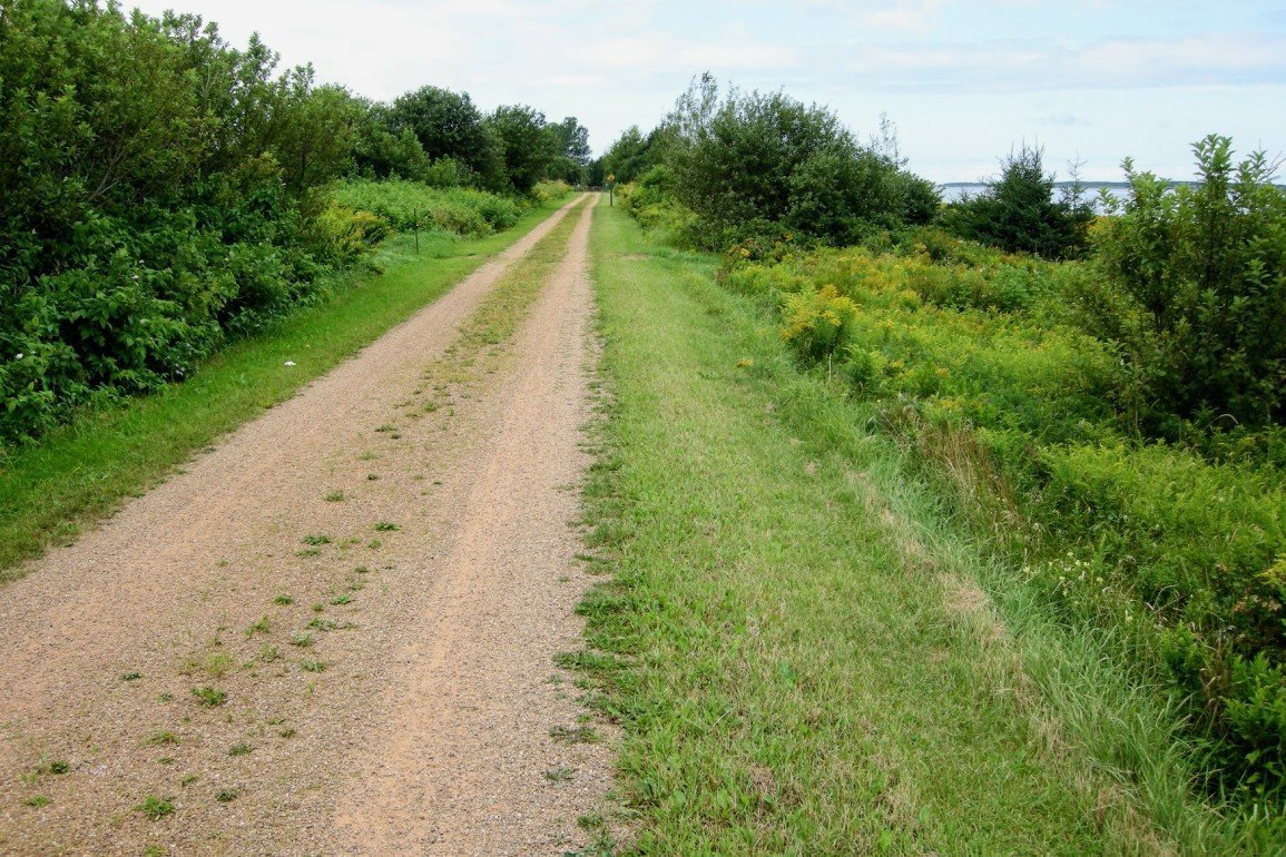 remote gravel road extends into trees