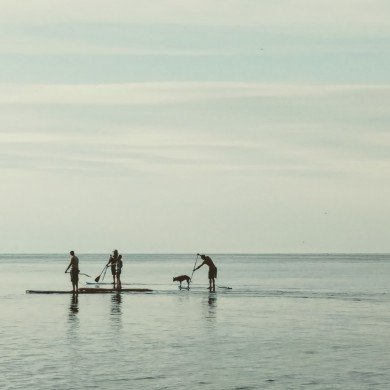 four men and a dog on paddle boards on a calm water