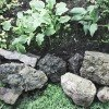 rock garden with green plants