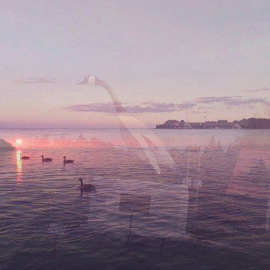 ghostly image of goose overlaid on image of lake with swimming geese
