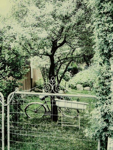 bicycle leans against tree behind closed gate in green leafy garden