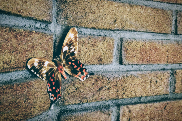 brown butterfly with orange markings is resting on brown brick wall