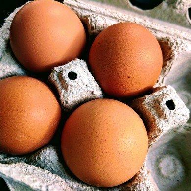 four brown eggs in cardboard carton