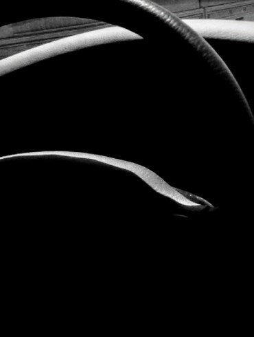 curved steering wheel in dark interior of car