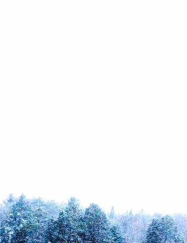 evergreen treetops against white snowy sky