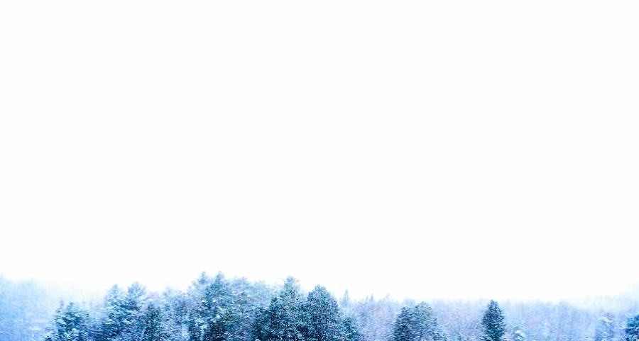 evergreen treetops against white snowy sky