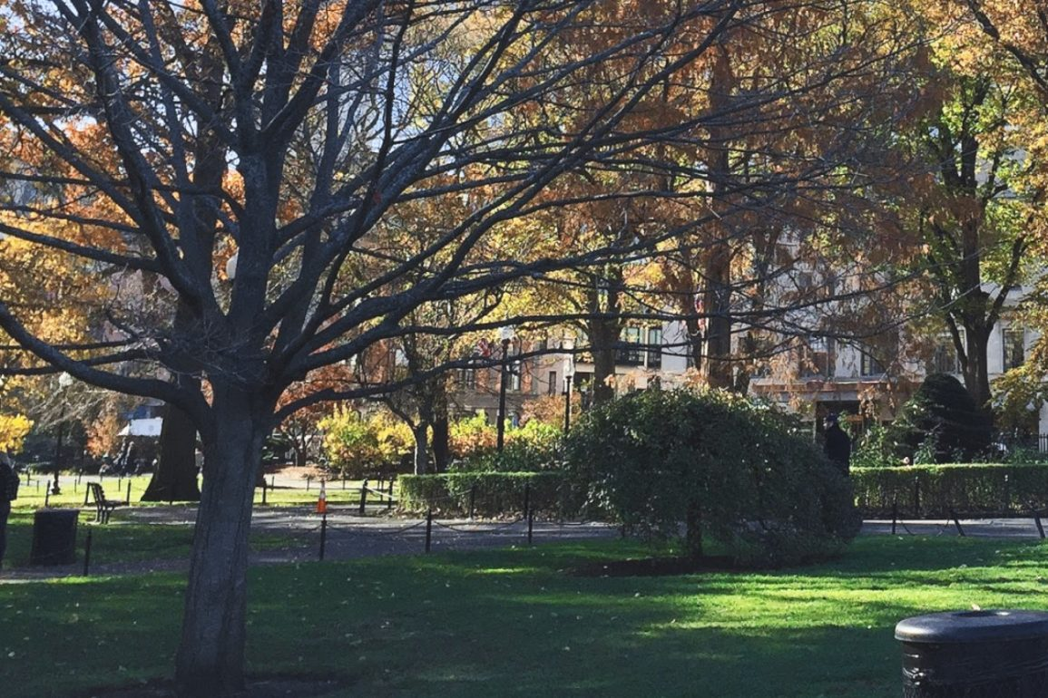 peaceful urban park filled with green grass and mature trees