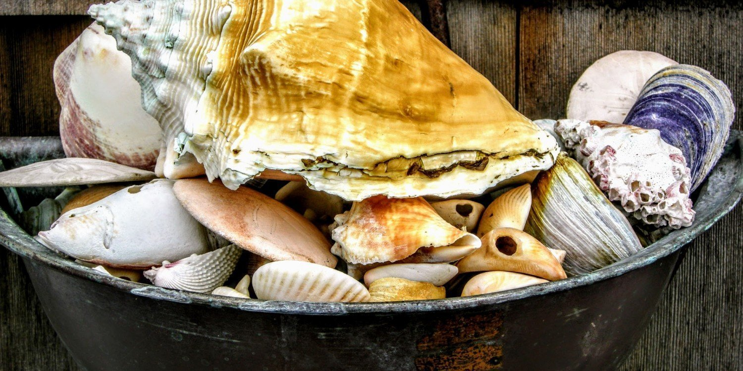 seashell collection in a metal bowl