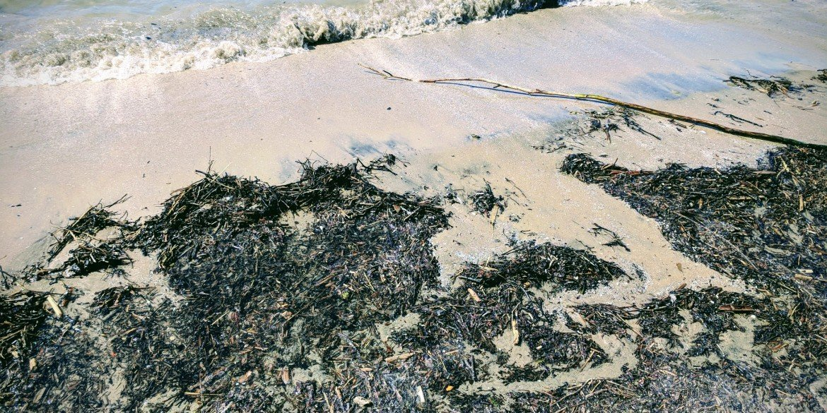 debris, seaweed and sticks washed up on sandy beach as wave rolls in