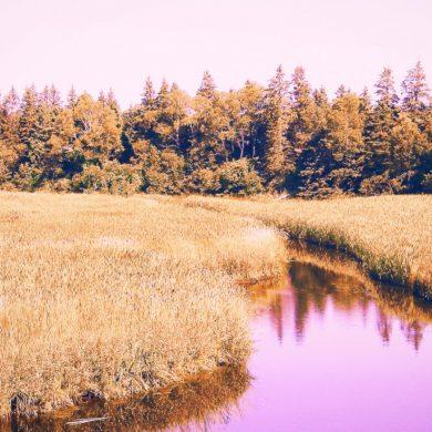 purple stream cuts through marsh and woodland