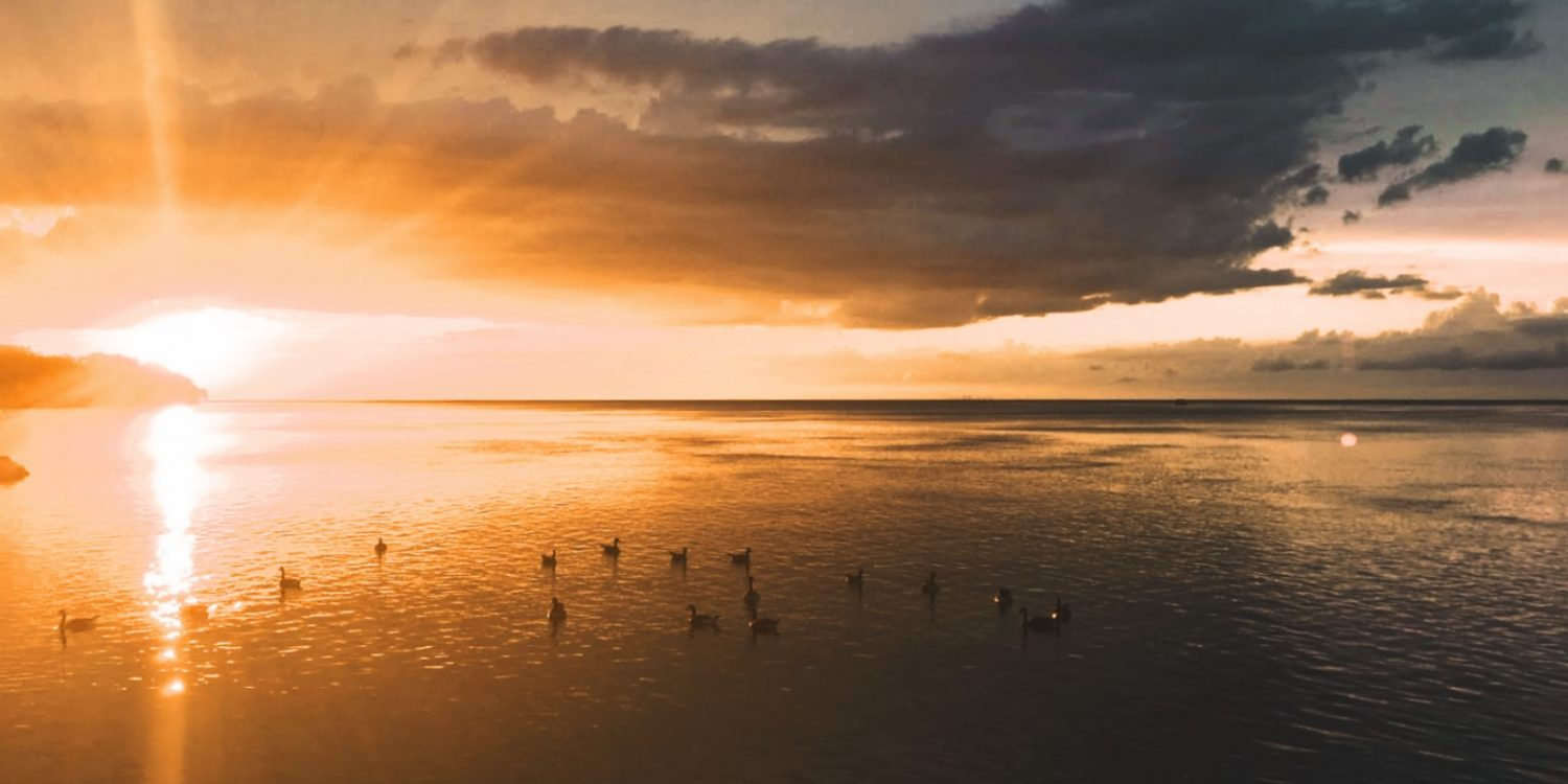 geese and ducks paddle about on lake at sunset