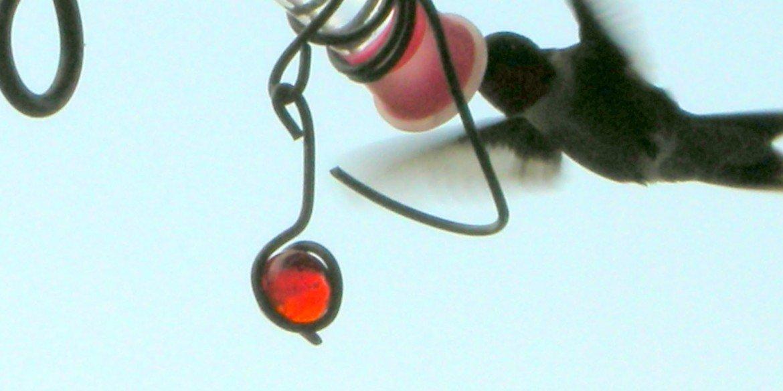 hummingbird hovering at feeder