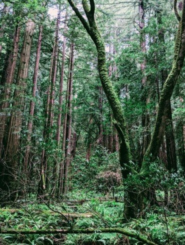 deep and mysterious green forest with moss on trees