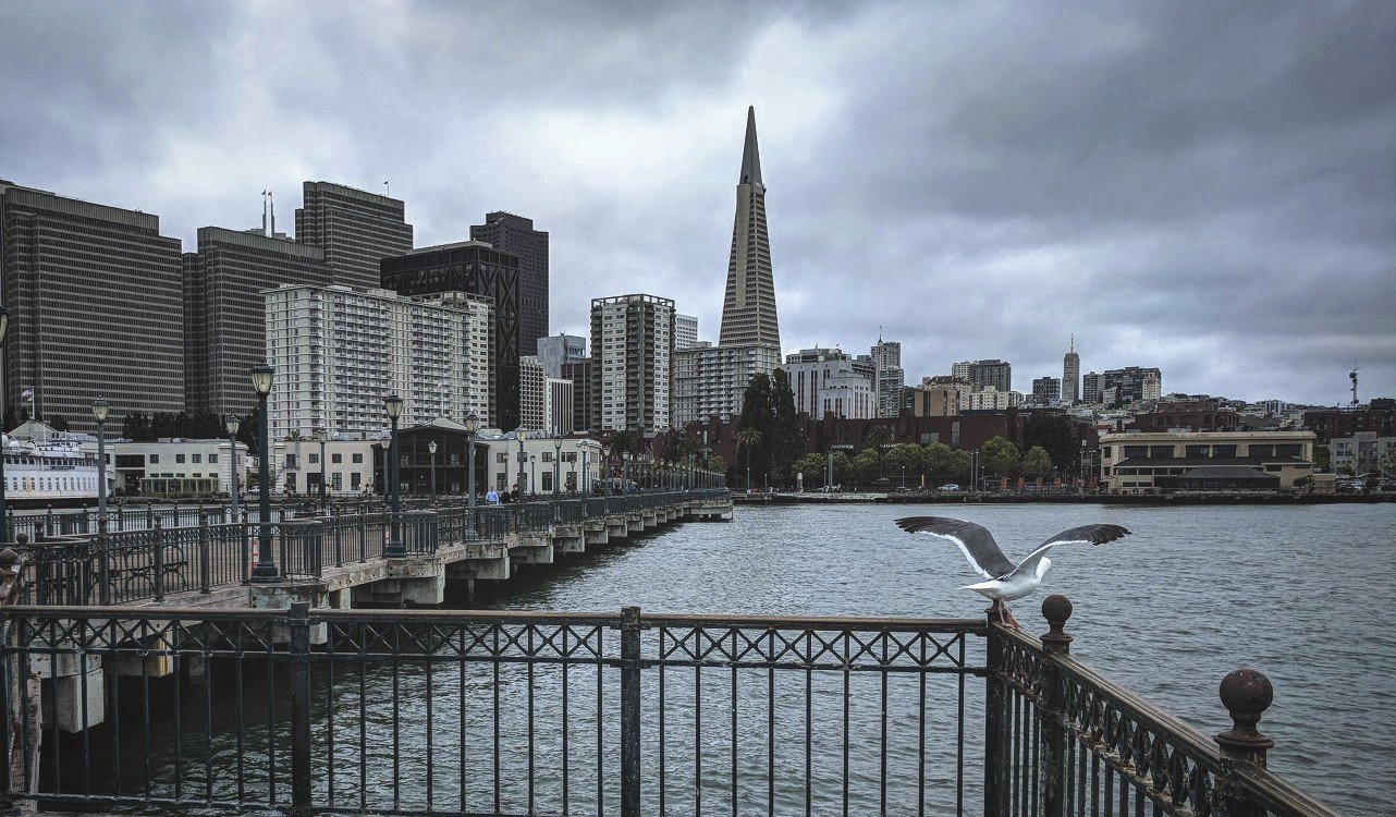 view of San Francisco from pier, with seagull spreading its wings on iron fence railing