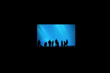 families in silhouette, looking at the Monterey Aquarium