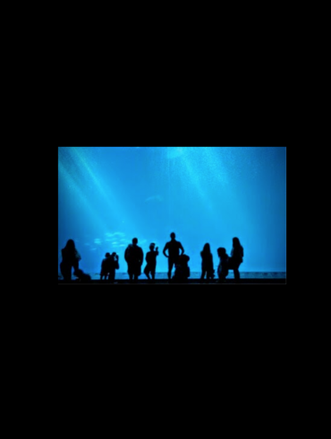 families in silhouette, looking at the Monterey Aquarium