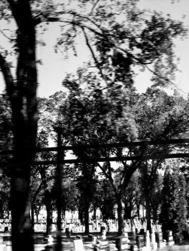 dark trees in silhouette, blurred as seen from a moving car