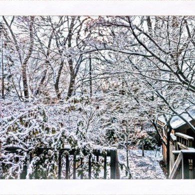 backyard full of snow covered trees in winter