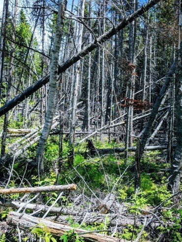 forest with many fallen trees