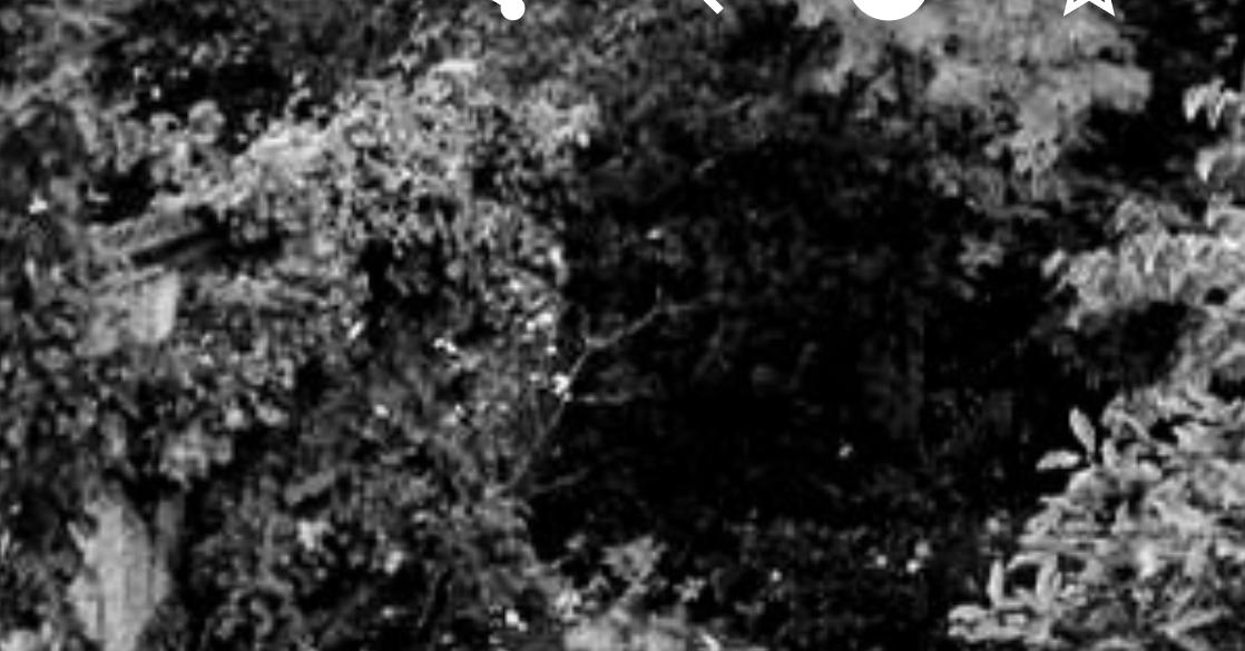 mysterious dark garden with bushes growing wild