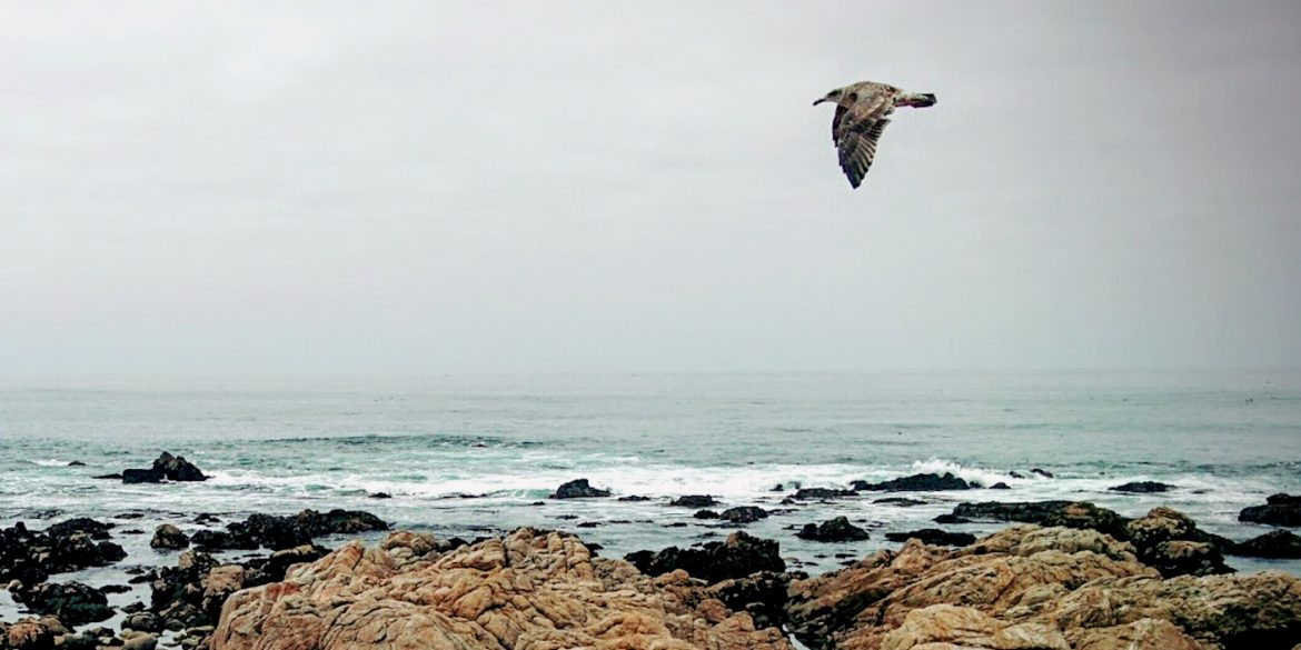 bird flies low along oceanfront above rocks and waves