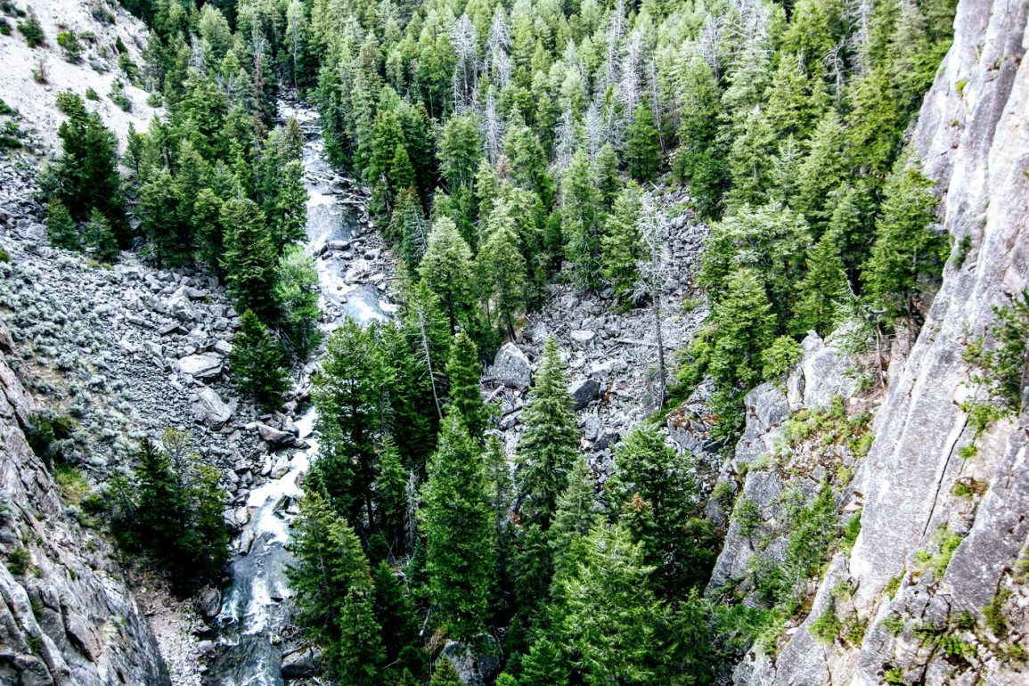 looking down at a mountain stream among the trees