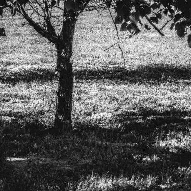 trees cast dark shadows on field