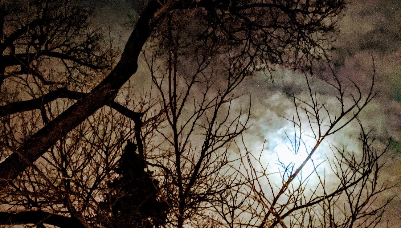 moon at night seen though tree branches
