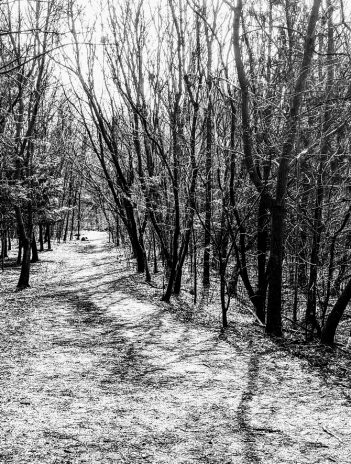 path leads into forest of leafless trees