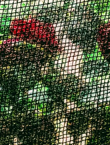 view into garden through a black insect screen