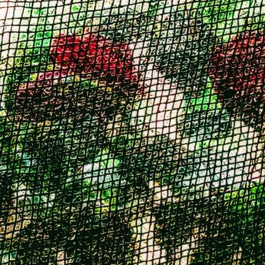 view into garden through a black insect screen