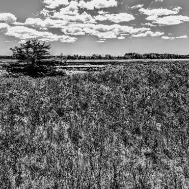 solitary tree under a big sky