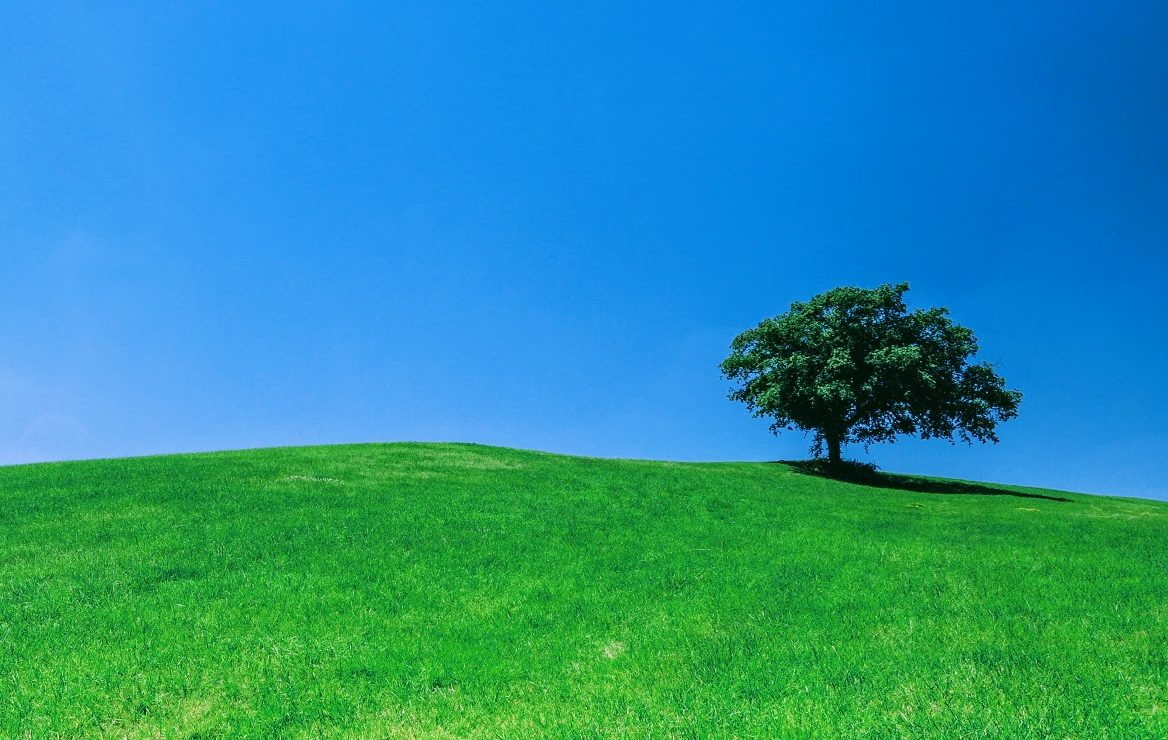 green grassy hill below a blue sky