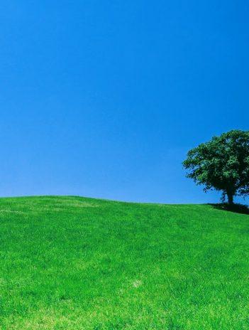 green grassy hill below a blue sky